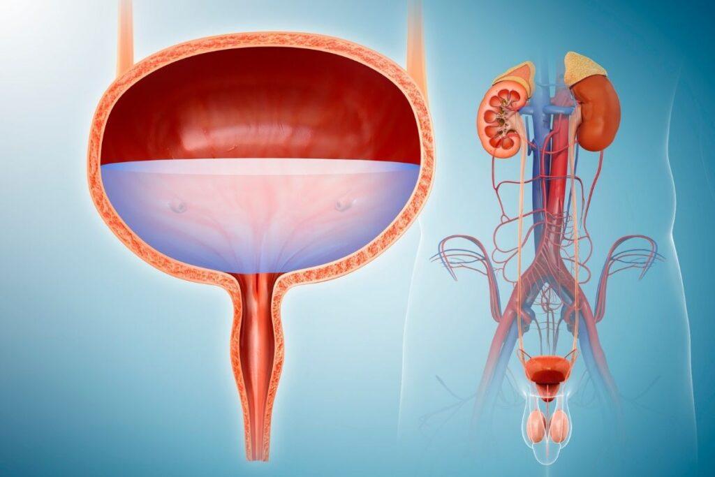 IBS-bladder-problems